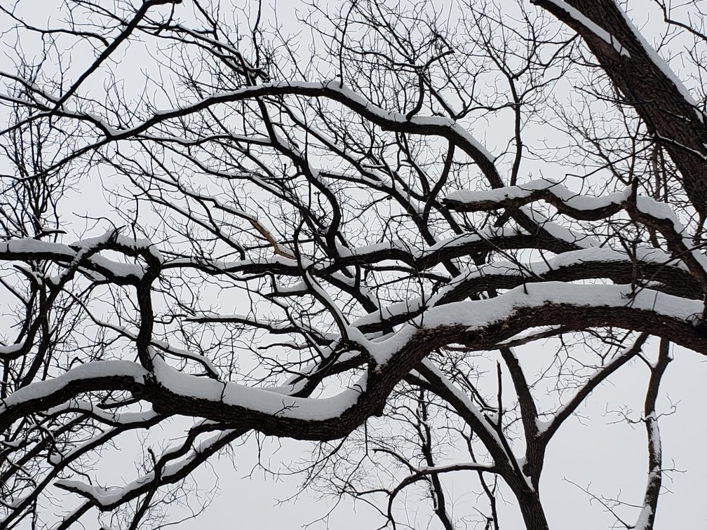 It&#39;s pretty despite the paralyzing effect #stlwx #snowpocalypse <br>http://pic.twitter.com/nKyMLbZG6J