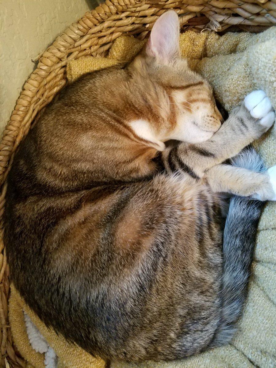 Look at this cozy Makey man ❤️