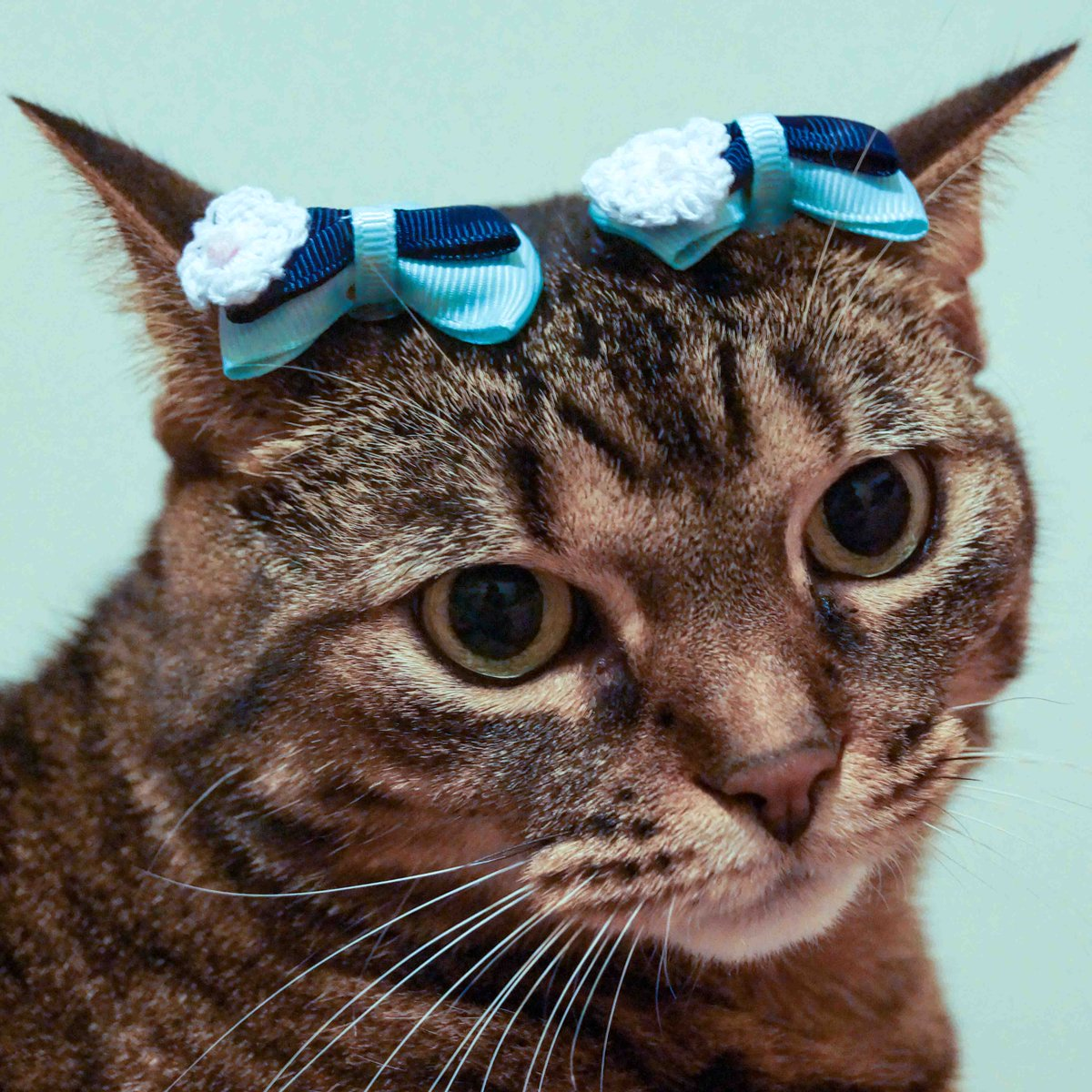 Amy Lee On Twitter 111 Angel Wearing Two Blue Bows Angel Cat Kitty Kittycat Bows Blue Baby Babygirl Girl Beautiful Pretty Lovely Elegant Nice Sweet Accessory Precious Cute Dear Innocent Adorable Beautifulgirl