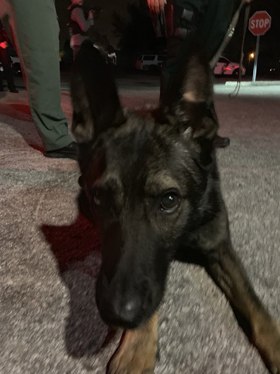 K9 Shep is starting out giveaways tonight!   If this post reaches 1000 RT's by the end of #LivePD, we'll give 3 followers long sleeves shirt, trading cards &amp; mystery item!   Are you down, #LivePDNation?!   Must RT, follow, &amp; have state/province on profile! <br>http://pic.twitter.com/96PHS4Id6U