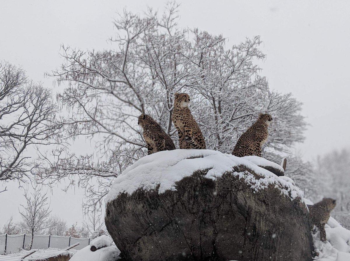 Omaha's Zoo's photo on #Caturday