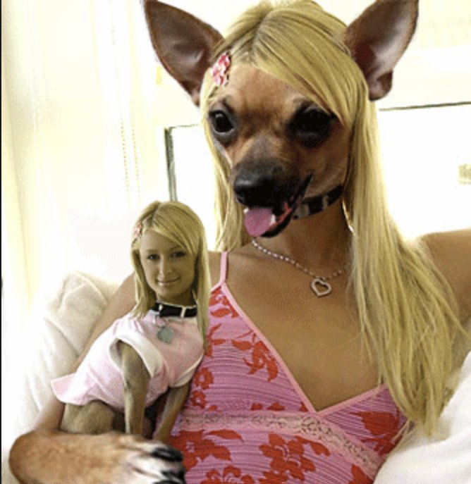 Julian's photo on Paris Hilton