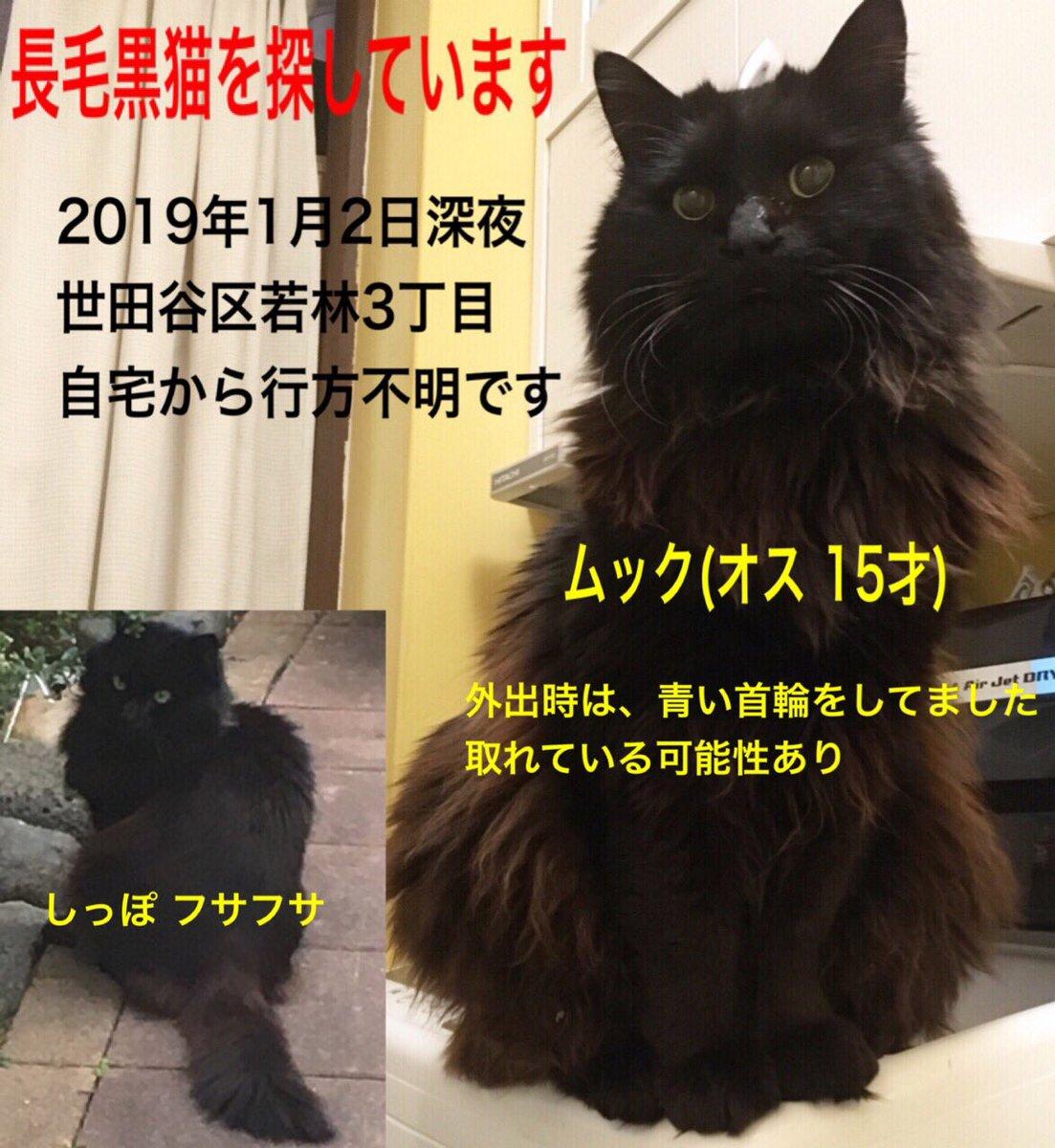 Etiqueta 長毛黒猫 al Twitter