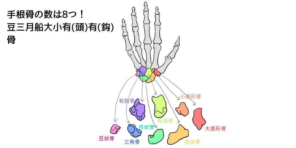 イラストで解剖学 Twitter Search
