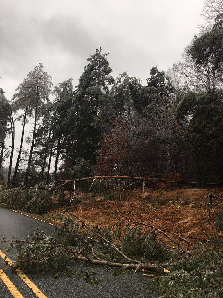 Trees down on River Ridge Rd
