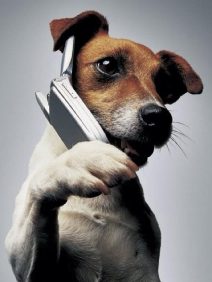 Mama, can you please get off the phone, it's chow time! Let's get serious!!!#JackRussellTerrier #DogsofTwitter<br>http://pic.twitter.com/8PUwtEK0ir