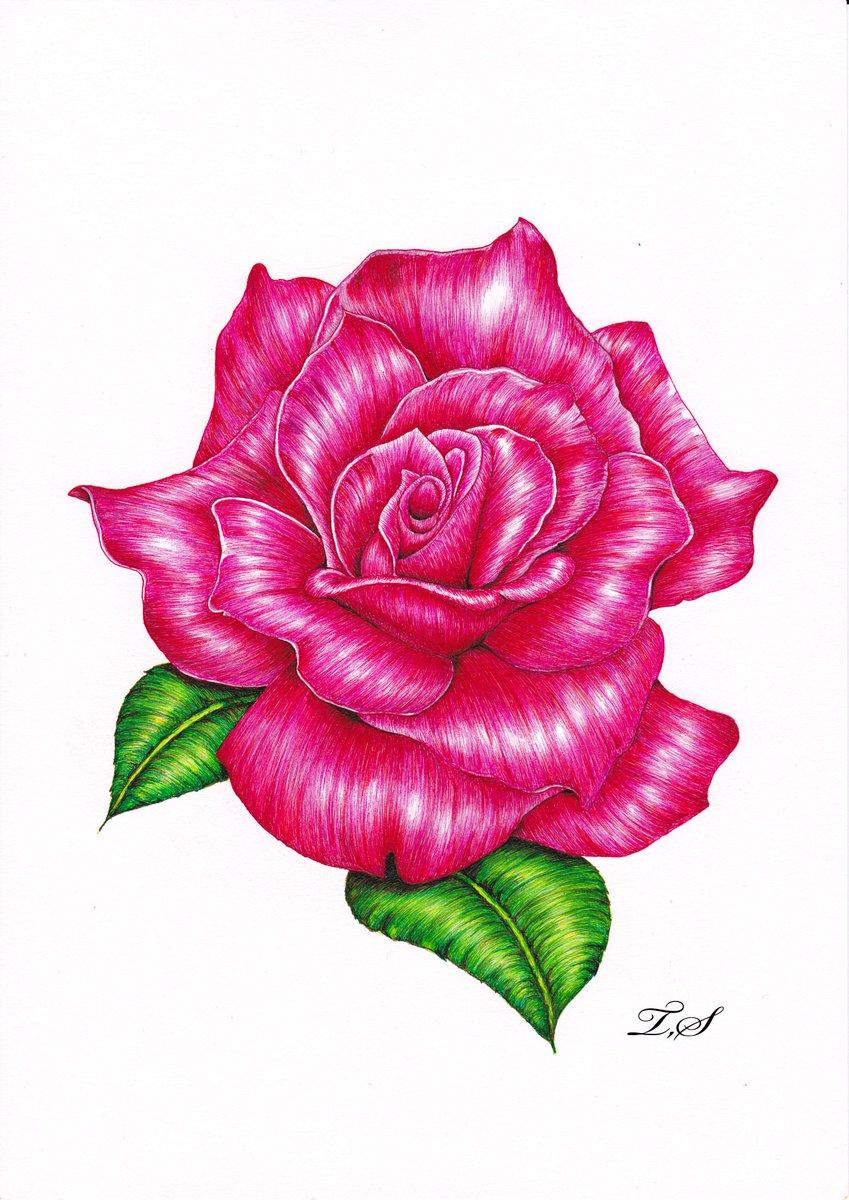 薔薇のイラスト Hashtag On Twitter
