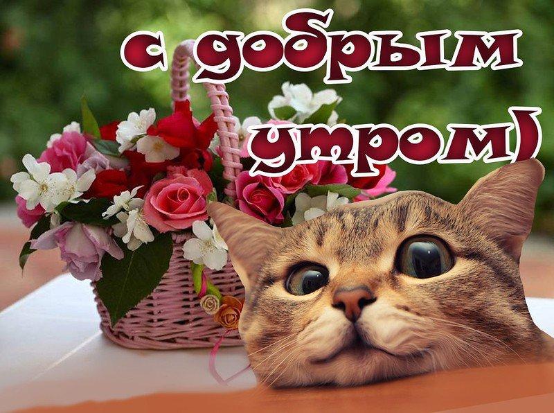 картинки кошки доброго утра снять