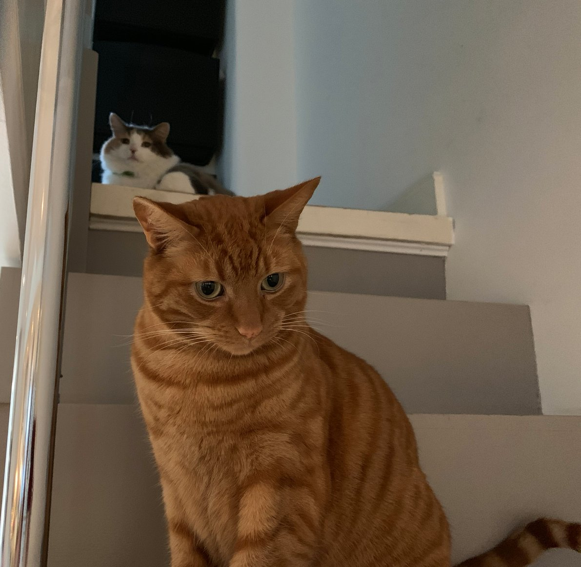 Two of my cats have formed a retro 80s electro-pop duo. Here's their first album cover.