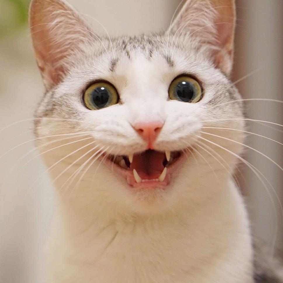 Картинка улыбающегося кота