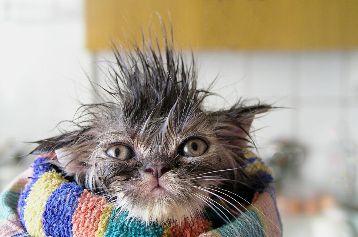 мокрая кошка демотиватор давно