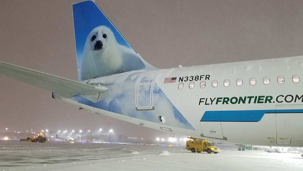 frontier airlines on twitter north the harp seal sits on a snowy ramp in chicago during winter storm harper todd ballack flyfrontier herewithfrontier frontierairlines https t co bmxk3lnuhc frontier airlines on twitter north