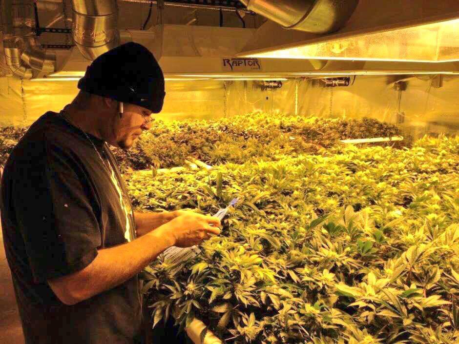 Производство марихуаны статья g марихуана
