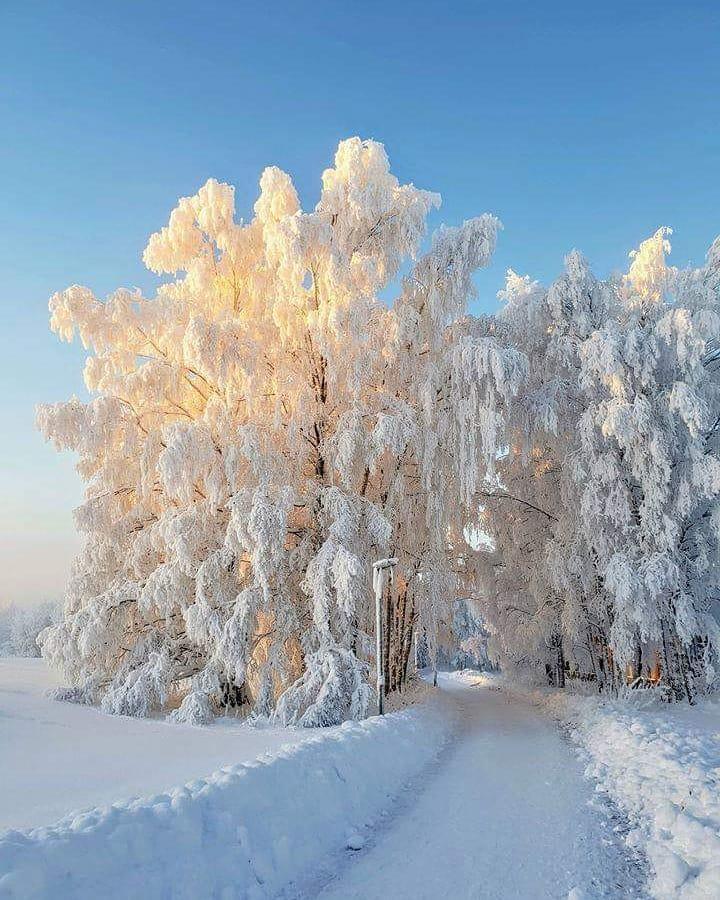 воплощён жизнь картинки мороз и солнце день чудесный стих виды
