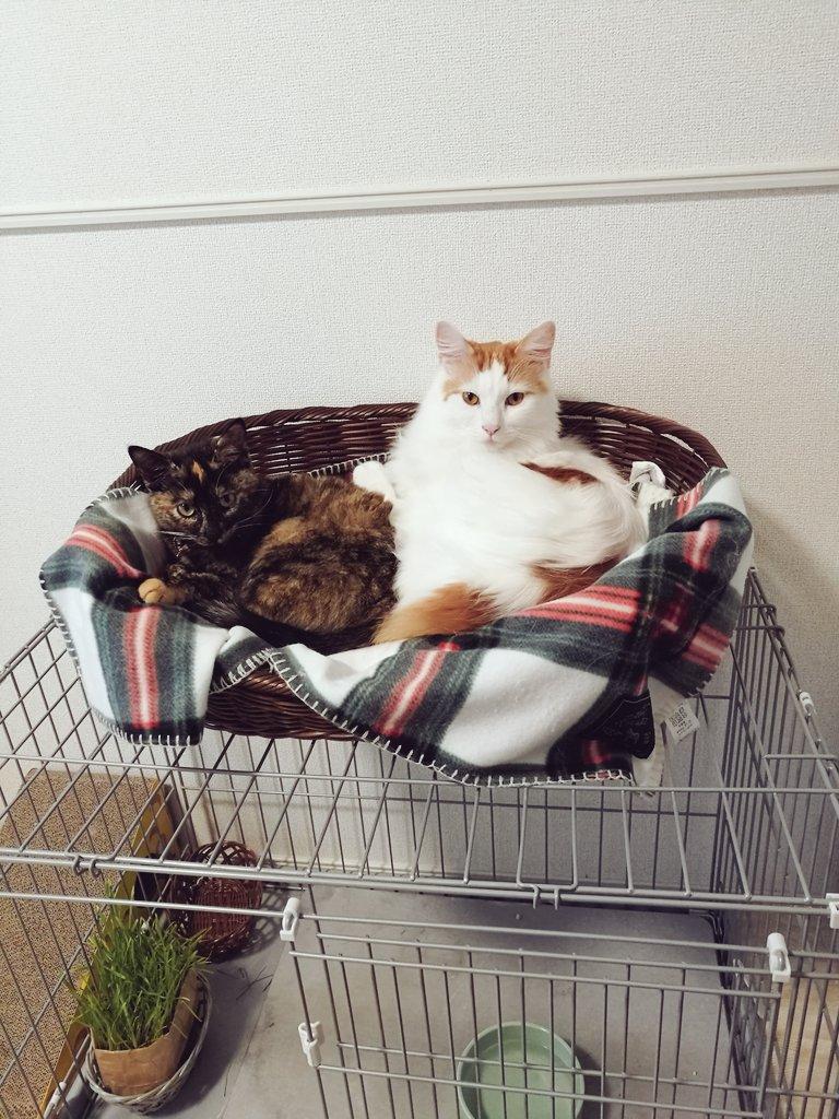 猫 ペット ショップ 売れ残り