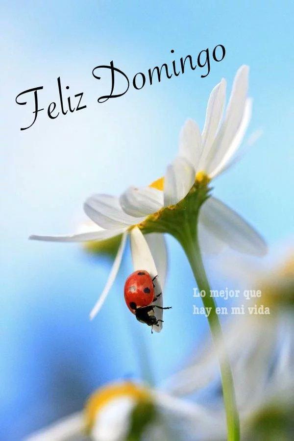 Sueños De Poemas On Twitter Feliz Domingo Bendiciones