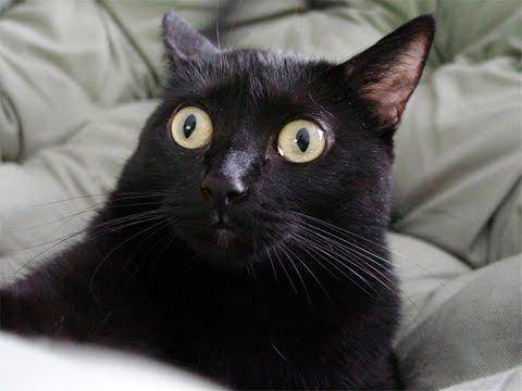когда контролер неожиданно заходит в зал и смотрит кто снимает,чтоб дать пиздюлей тем временем я,снимаю в тихушку,одним глазом смотрю на экран,другим смотрю за контролершой #BTSLoveYourselfInSeoulFilm  #BTSARMY #TOMORROW_X_TOGETHER