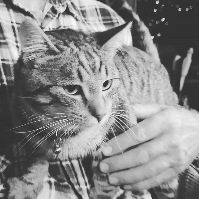 RIP little Torch. For the ten months since we rescued you as a feral kitten you have been loved.  We will miss your cuteness and funny, playful ways.  Journey safely over the rainbow bridge. . . #rip #catsofinstagram #kitten #kittensofinstagram #sad #rai… http://bit.ly/2TV4gkR