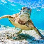 Great Barrier Reef Twitter Photo