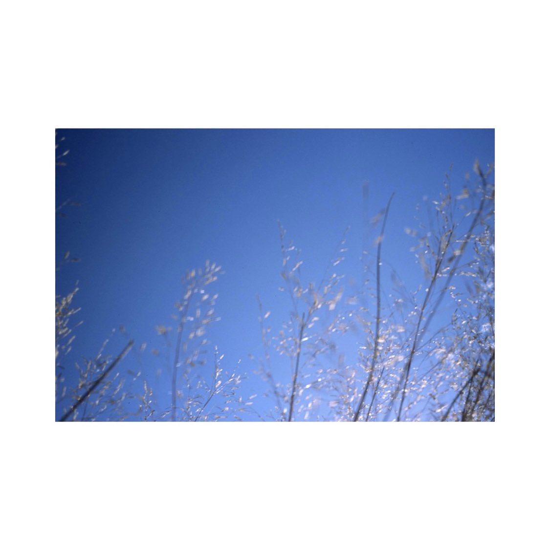 #olympustrip35 #olympus #agfa #agfact100 #film #filmcamera #filmphotography #instagram #instagramjapan #tokyocameraclub #sky #skylovers #skyblue #bluesky #whiteclouds #solar #wind #light #shadows #myworld