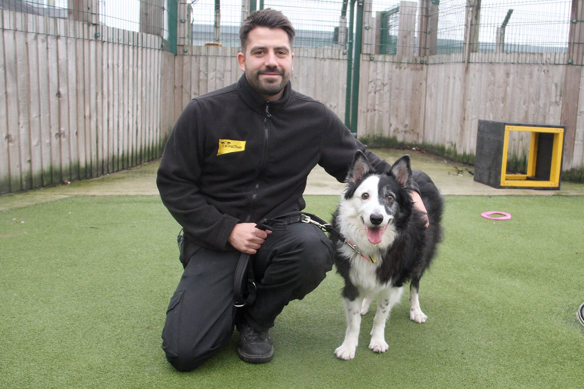 Big #smiles from Macey! This beautiful 11 year old #Collie is super friendly and loves to play fetch! #rescuedog #manchester #bordercollie #rescuecollie #collielife #collielove #adoptadog #dogslife #doglove #fridayfeeling #bestfriend #wednesdayvibes #wednesdayfeels  @DogsTrust <br>http://pic.twitter.com/7gnVIIomGp