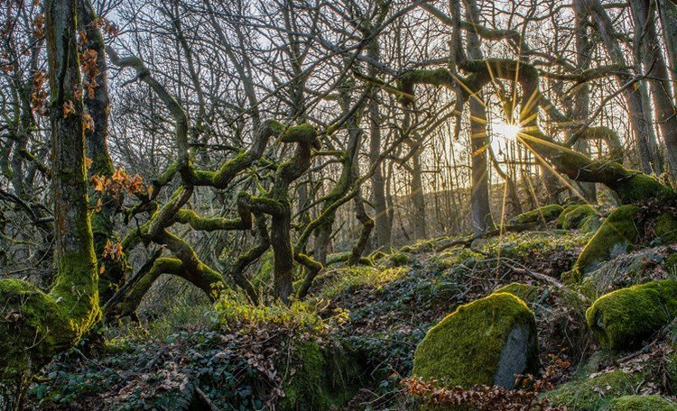 Losing irreplaceable #AncientWoodland https://t.co/7Nq3X3tELd #ThingsThatAreBadForYourHealth