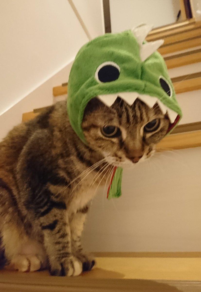 test ツイッターメディア - ダイソーで売ってた被り物☺️ ガチャガチャするよりお安い‼️でも、我が家で被れるのは、うりこしゃんだけ(;ω;) なつには小さいし、子猫には大きいし、色んなサイズが有れば嬉しいのに(T^T) #ダイソー #猫のかぶりもの https://t.co/aX1O5064l0