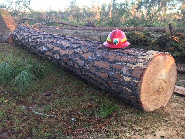 GFC has two relief programs for #forest landowners affected by #HurricaneMichael. One for managing storm debris, and another for clearing debris from existing forest roads and fire breaks. Let us know if you have questions, and please spread the word!  http:// ht.ly/XnGK30nkQZL  &nbsp;  <br>http://pic.twitter.com/K2j8yeqMYb