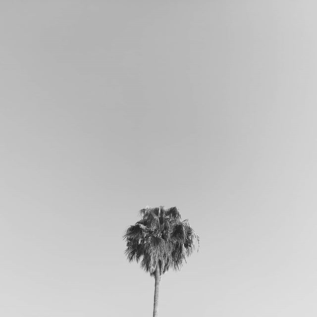 vibes in cali 🌫️ last september . . . . • • . . • • . . . . 🌴 #feeling #dreamy #palmtree #palmtrees #california #cali #chill #paradise #nofilter #wild #sky #skyline #skyview #skyporn #skylovers #skyphotography #inspiration #dailyinspiration #insp… http://bit.ly/2RSaJzB