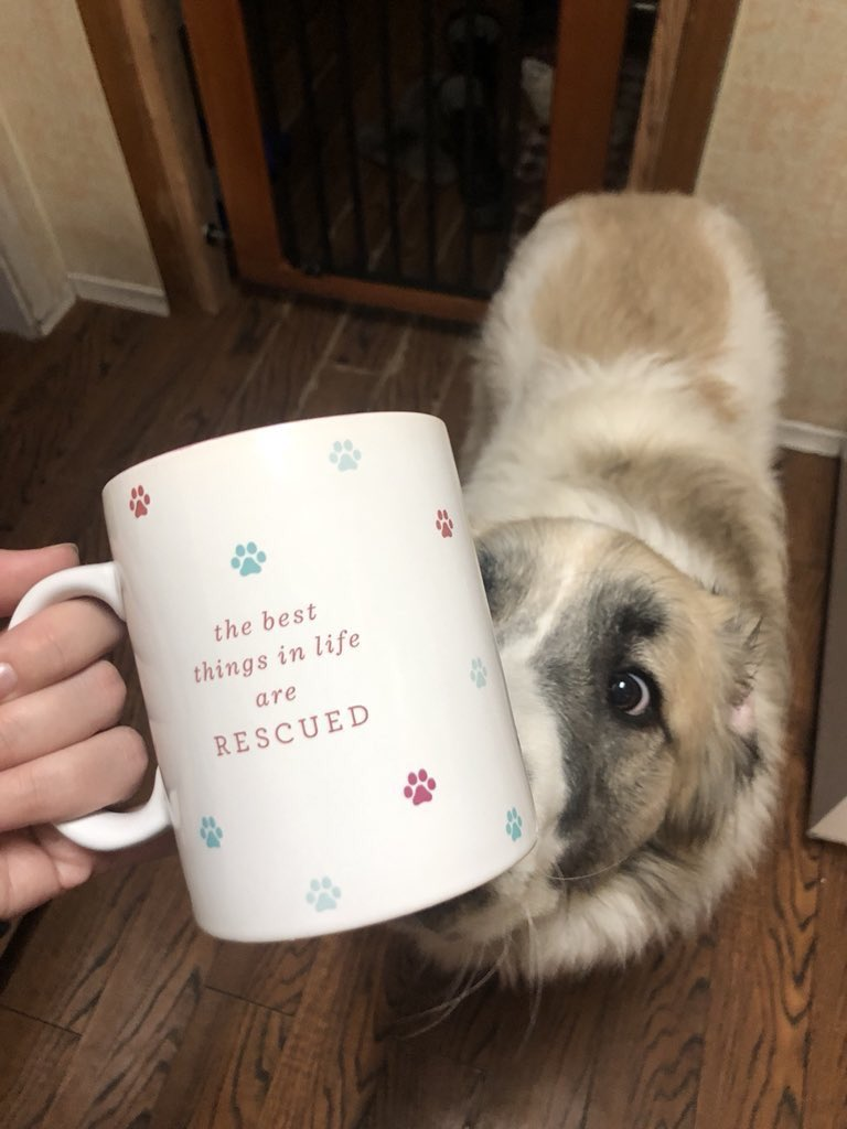 was just trying to take a picture of my new mug and i think Banjo knew it was about him <br>http://pic.twitter.com/tMVKuAAQdk