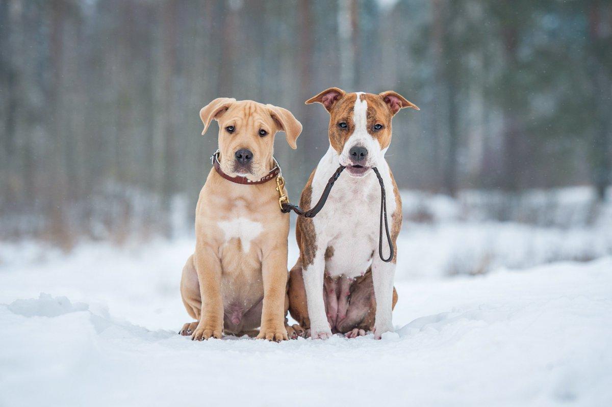 Erie County SPCA, NY on Twitter: