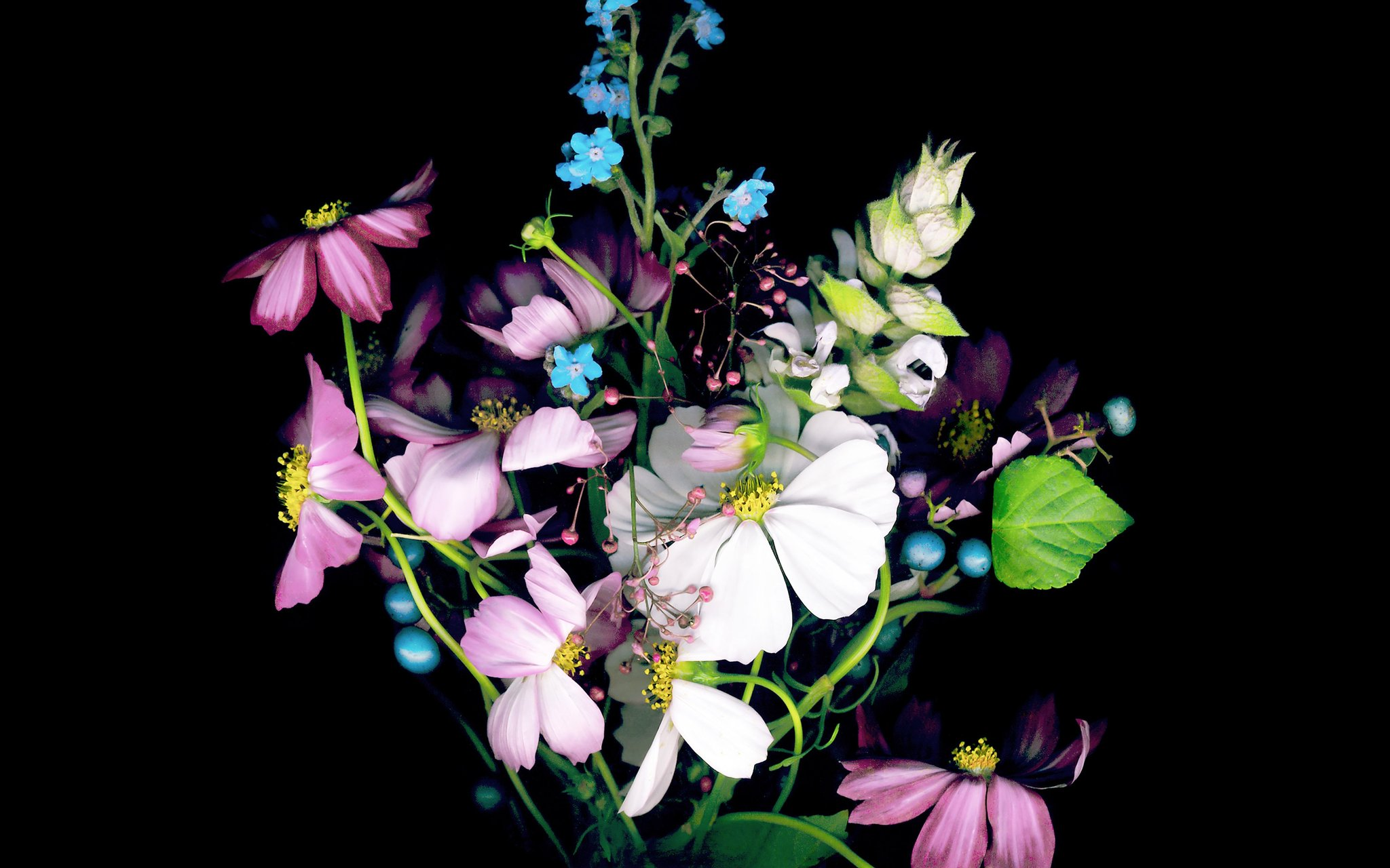 Картинки на рабочий стол айфона цветы овд-дракон, его