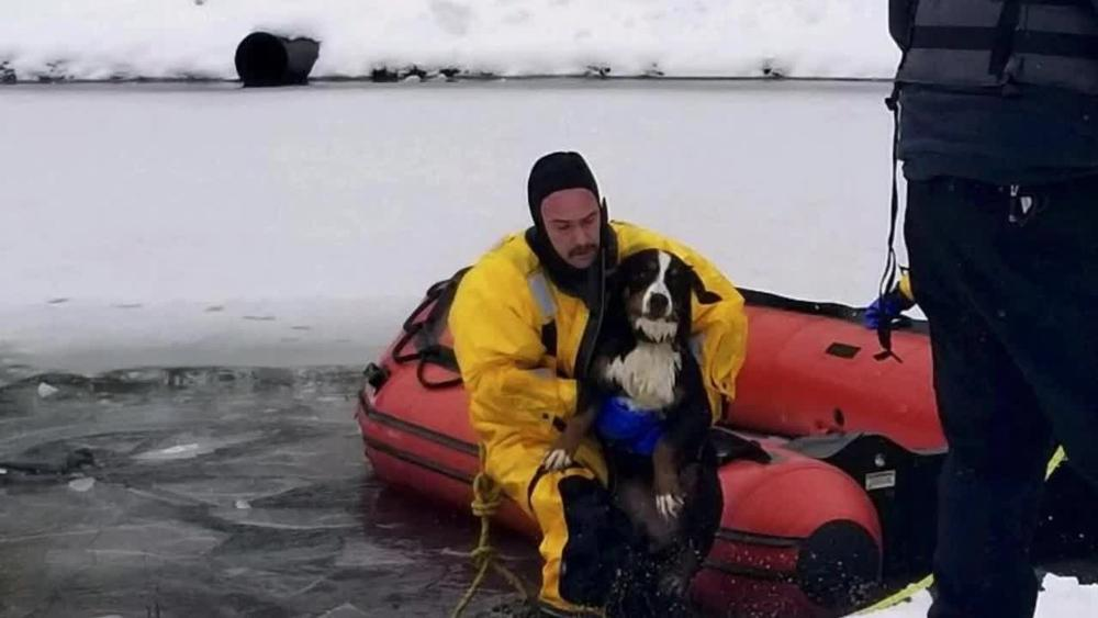 Ohio firefighters rescue puppy from icy pond https://t.co/aq5gA7pHbo
