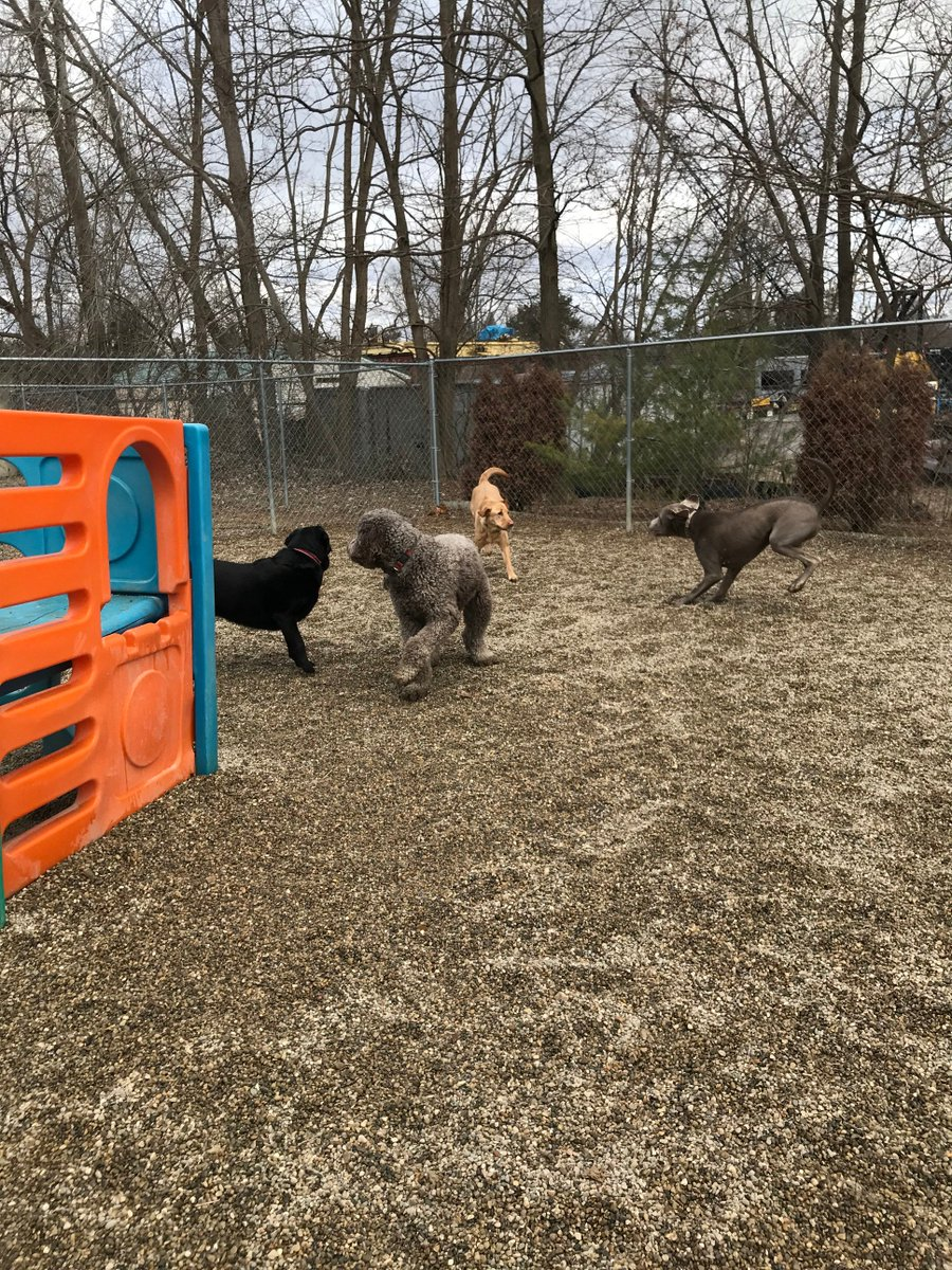 Greta, Tucker and Stitch get ready to play with Kipling