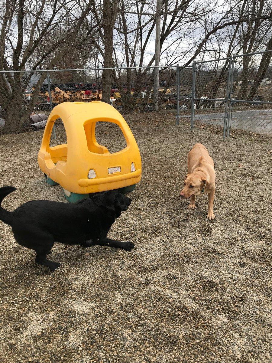 Greta and Kipling race off