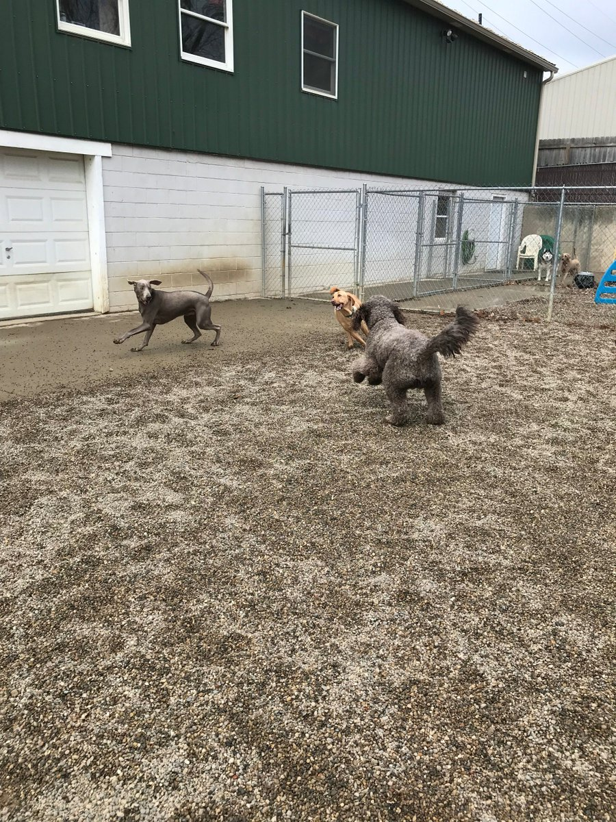 Stitch, Tucker and Kipling love playing together