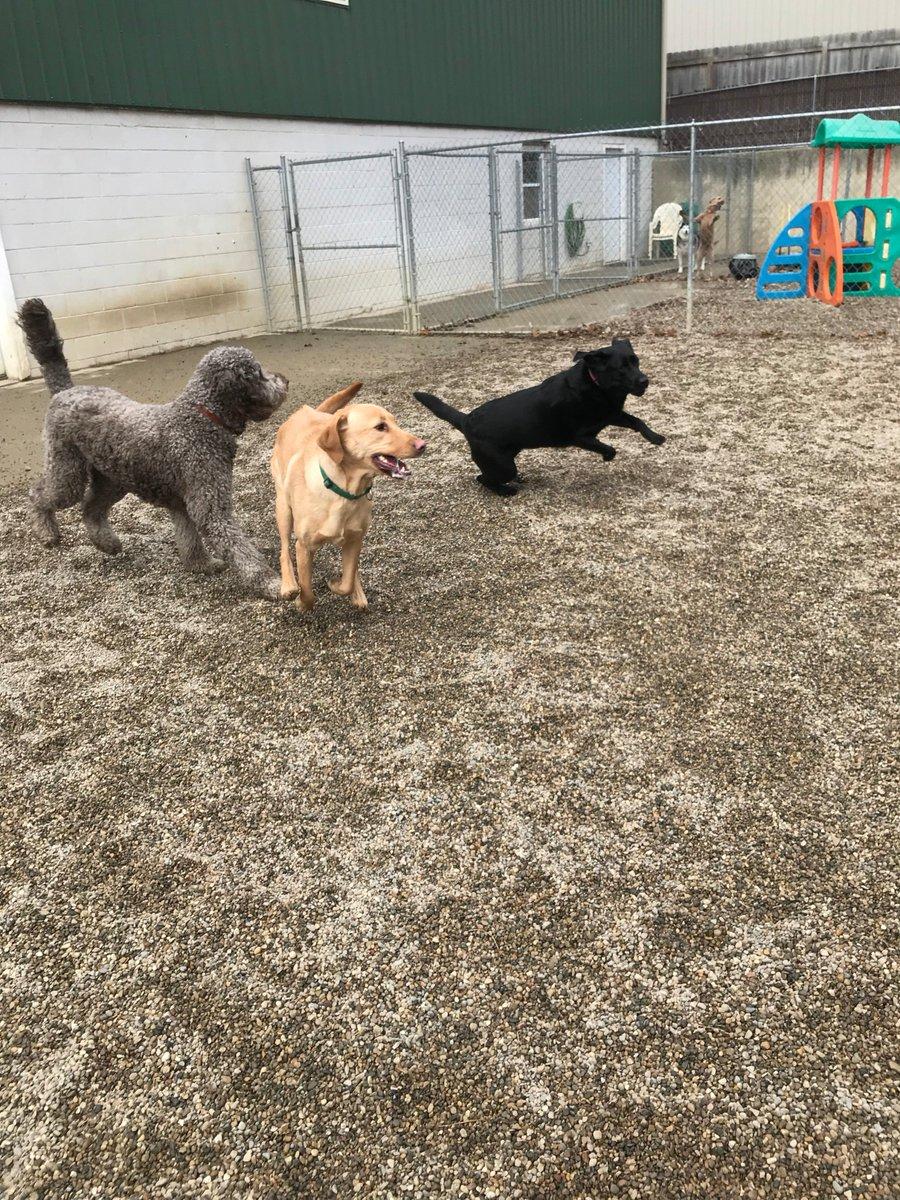 Greta, Tucker and Kipling race by