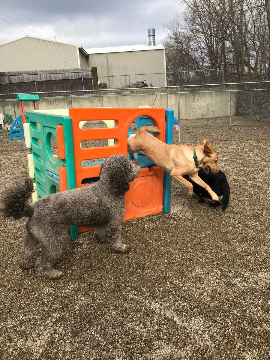 Kipling leaps down to play with Tucker and Greta