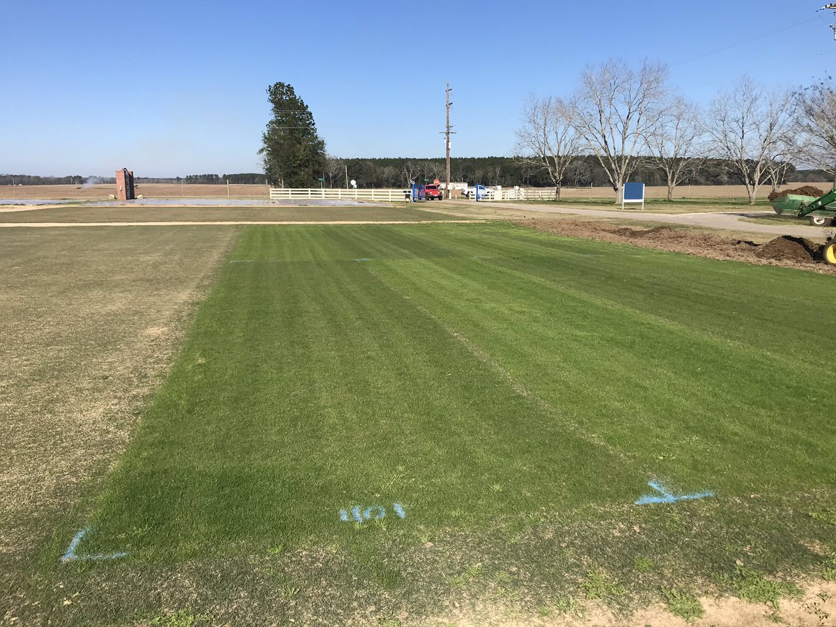 #Celebration bermudagrass overseeded with two cultivars of  bulbous bluegrass. Will it regenerate itself in subsequent years? That's the question. <br>http://pic.twitter.com/Vqi8Qq3K4F
