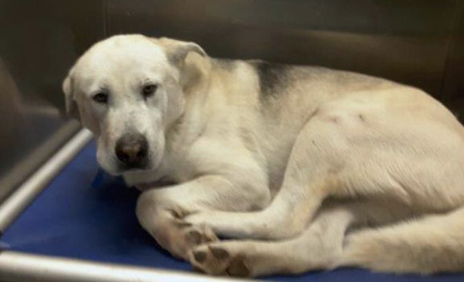 BIG BOY IS SAFE #Memphis Thanks to all who shared him  https://www. facebook.com/17039065932308 87/posts/2277162465905294/ &nbsp; … <br>http://pic.twitter.com/bCvaQEGLll