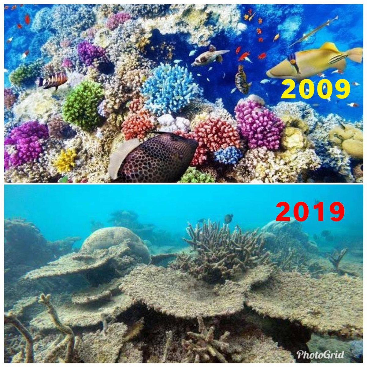 Replying to @ImRo45: The only #10YearChallenge we should be worried about
