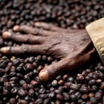 The crisis in your cup: At least 60% of all #coffee species are threatened with extinction.  Find out more: https://t.co/hDsAJ50xba @IUCN @Toyota_Europe #EnvironmentalChallenge2050    📸:Alan Schaller