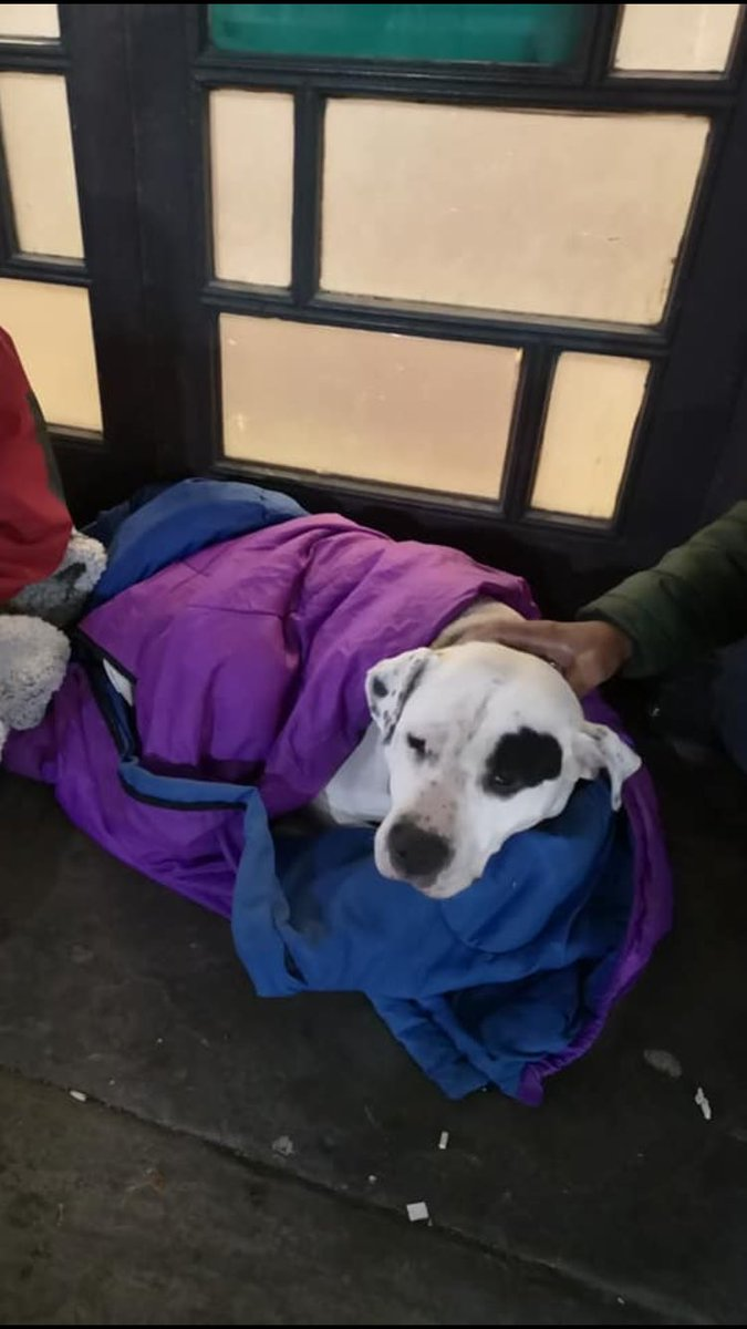 Crystal has been taken from her homeless owner in #leeds he is distraught please contact us in confidence if you know where she is #appeal #lostdog #Homeless #dog #help<br>http://pic.twitter.com/fpK5juf3MR