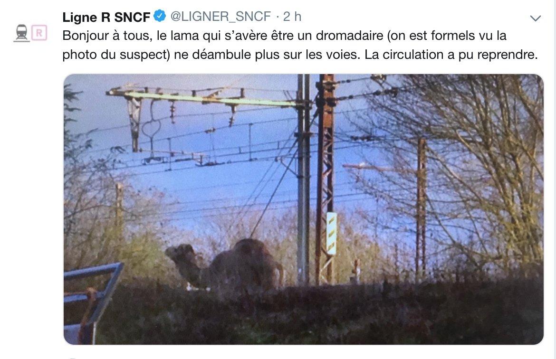 Seine-et-Marne : un dromadaire bloque les voies d'un Transilien https://t.co/eRIlfm3HJ9