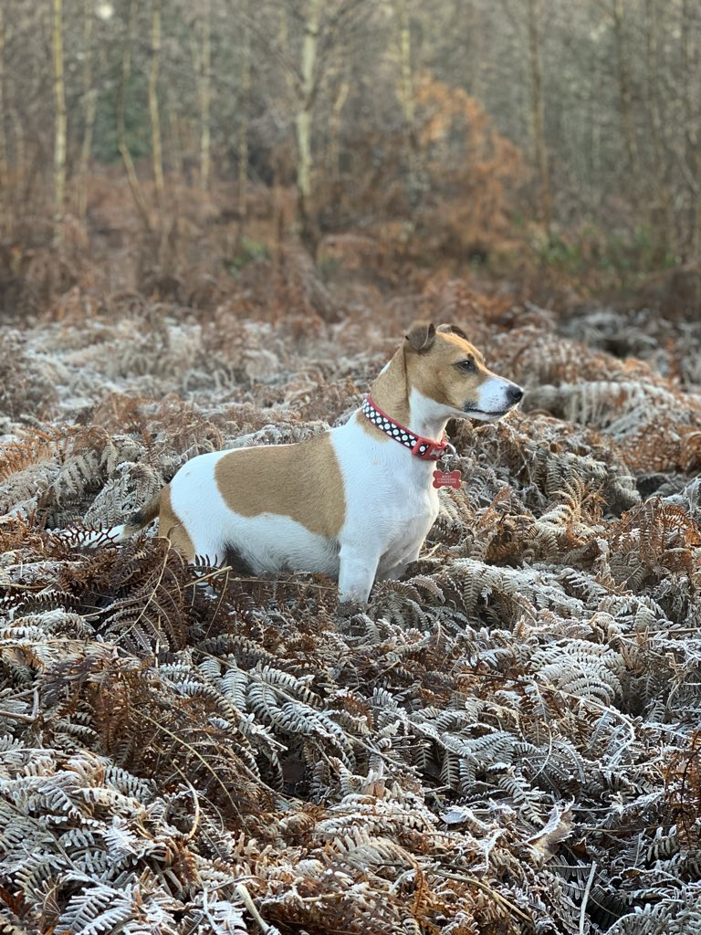 K9 pawtrol complete. All's quiet on the frosty front. Job well done #DogsOfTwitter #JackRussellTerrier  <br>http://pic.twitter.com/IWiWqiEevi