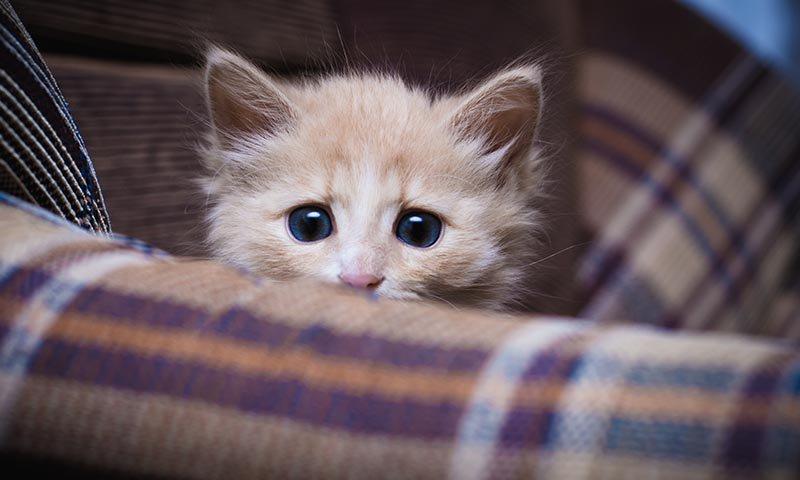 Tu gato también puede sufrir estrés https://t.co/iTMwzCKi84