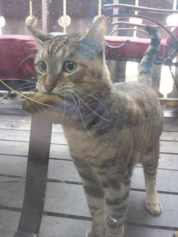 Vegan cat.  &quot;I killed this for you!&quot; <br>http://pic.twitter.com/ia6Psz0Km3
