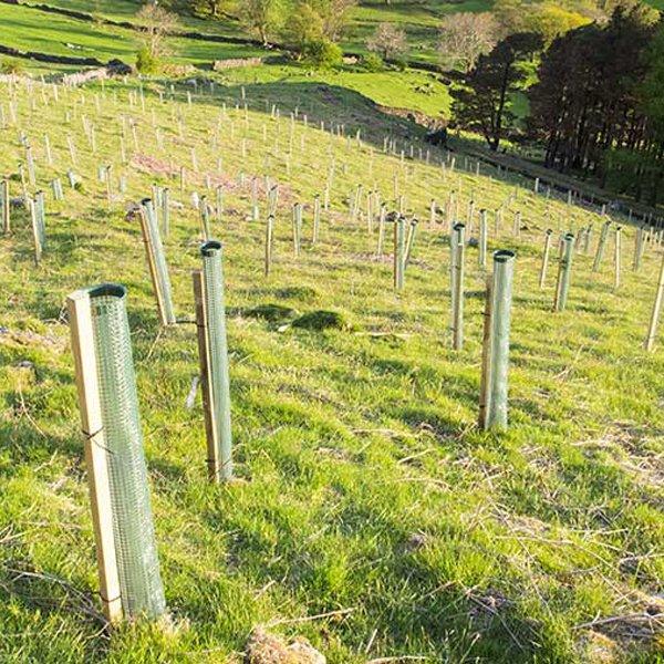 Whats on Appleby: Big Eden Tree Plant