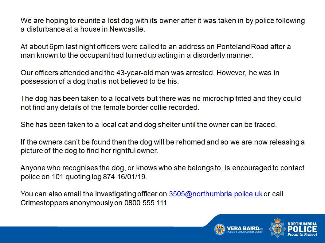 Can you help us reunite this lost dog with its owner? We found her at an address on Ponteland Road after we were called to a disturbance at a property there.  She has been taken to a cat and dog shelter but is not microchipped so we need your help!  Read more below  <br>http://pic.twitter.com/c3H9eLr84I