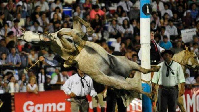 #JesúsMaría | Sacrifican caballo que sufrió un fuerte golpe en la noche del martes